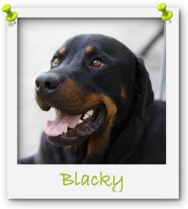 Blacky1